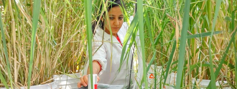 Picture of researcher with test equipment among plants doing testing